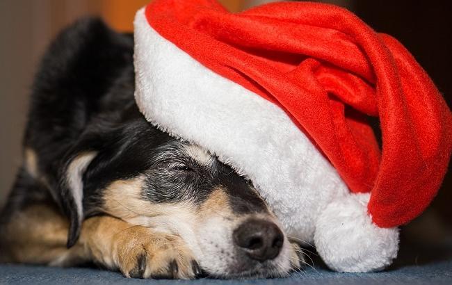 Фото: Год собаки 2018 (pixabay.com/4924546)