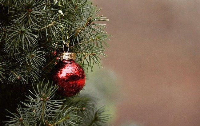 Божье творение: в ПЦУ призвали отказаться от живых елок на праздники