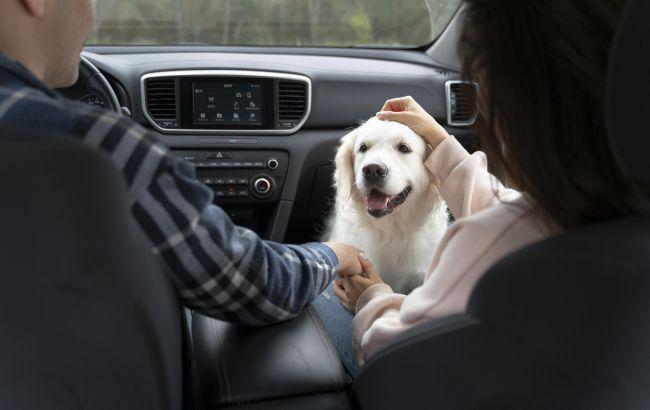 Как очистить салон машины от шерсти животных: лайфхак для автомобилистов