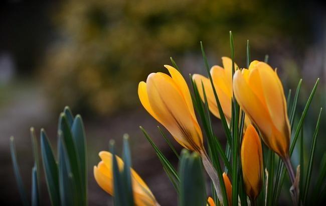 Свято 8 березня: наймиліші привітання у віршах