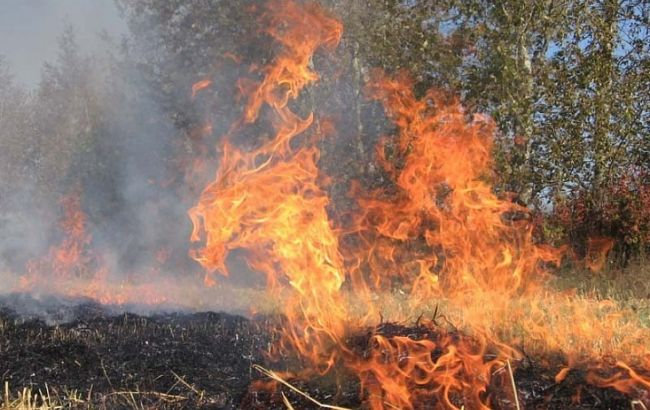 Фото: лесной пожар