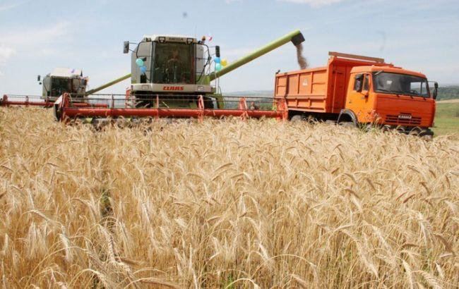 Фото: до 2070 можуть зникнути зернові культури