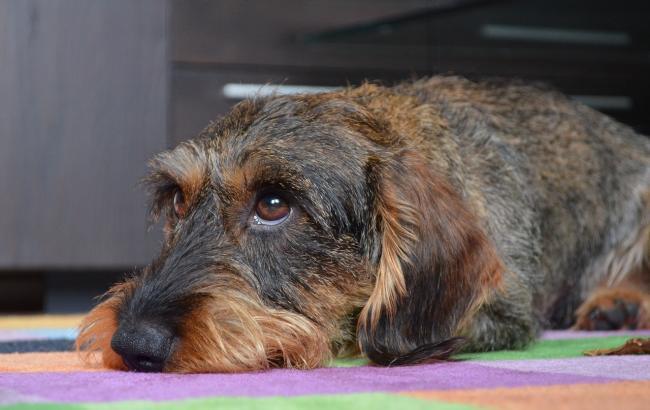 Фото: Собака (pixabay.com/ru/users/Brummeier)