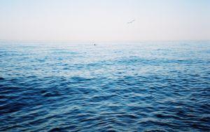 Подальше от туристов: секретные пляжи Одессы, о которых вы могли не знать