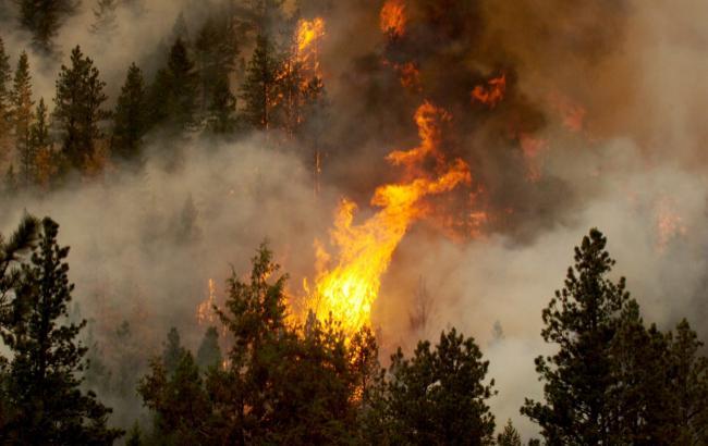 В Херсонской области возник очередной лесной пожар