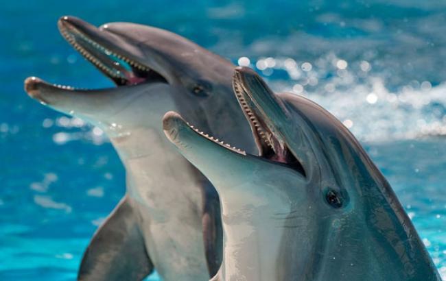 Фото: Дельфіни Ялтинського океанаріуму (suntime.com.ua)