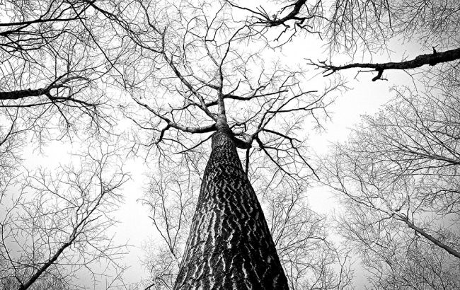 У Вінниці повалене дерево вбило 12-річну дитину