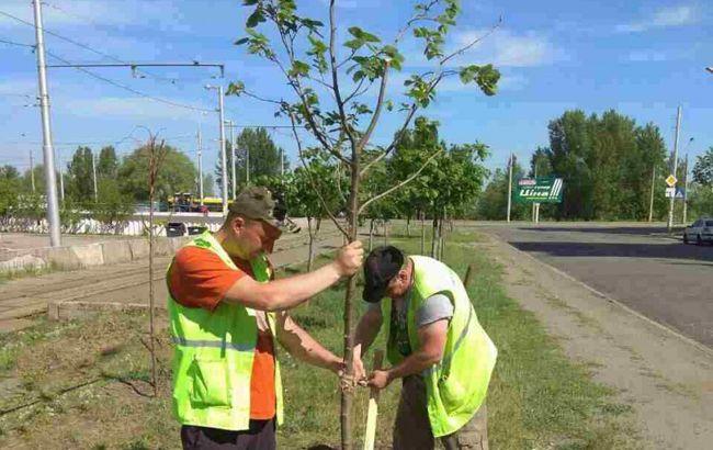 В городах изменят правила высадки деревьев
