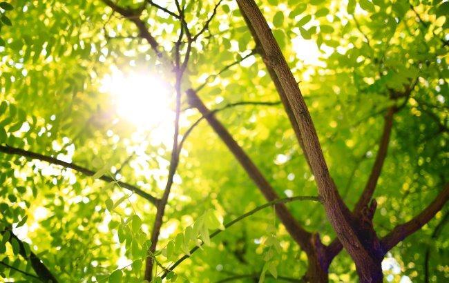 Фото: Дерево (unsplash.com/Devil_Jameson RAGE)