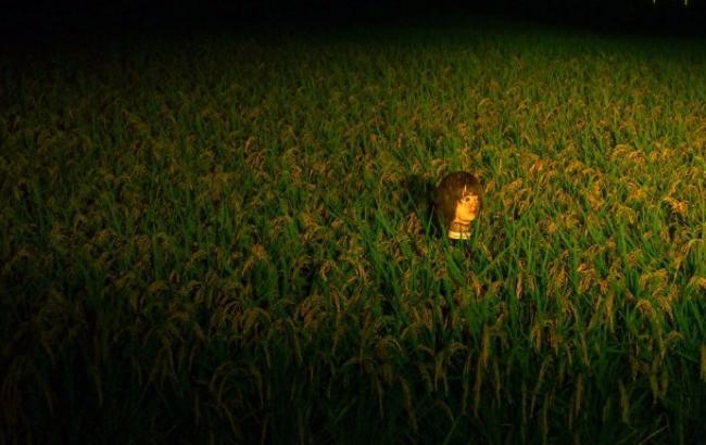 Канадець фотографує страшні голови, що стирчать із землі на полях Японії