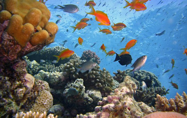 Підводний рай: скільки коштує дайвінг на курортах Єгипту