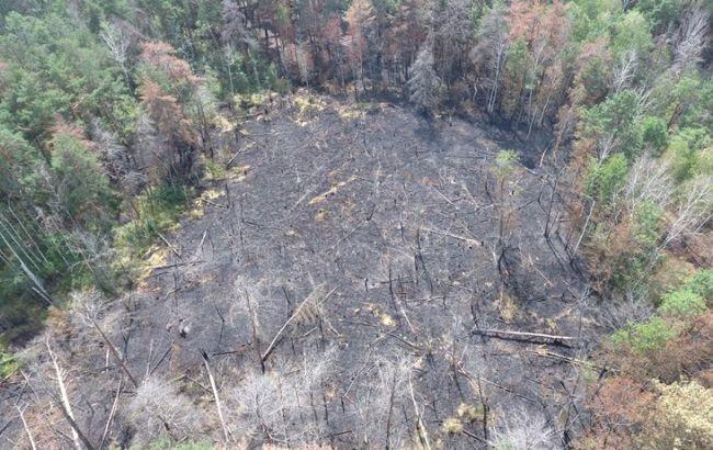 Фото: последствия лесного пожара в Зоне отчуждения