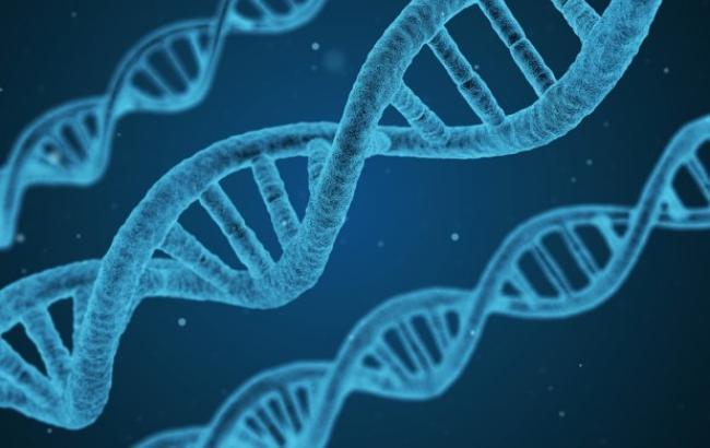 Фото: ДНК (pixabay.com/qimono)