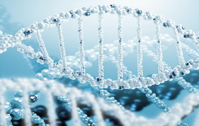 Фото: Ланцюжок ДНК людини (alenakrasnova.com)