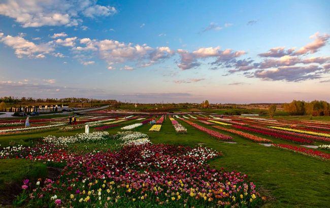 Тюльпаны, сакуры и море: лучшие парки возле Киева для прогулок на выходных