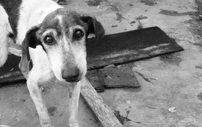 """""""Ей очень больно, но она продолжает искать мины"""": история раненой собаки из зоны АТО (фото)"""