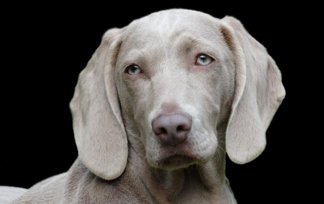 У Києві шукають собаку, яку вкрали разом з дорогим авто