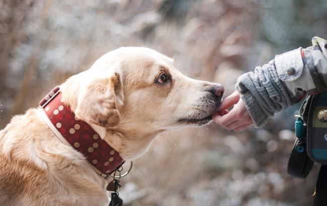 У Каховці жорстоко потруїли вуличних псів