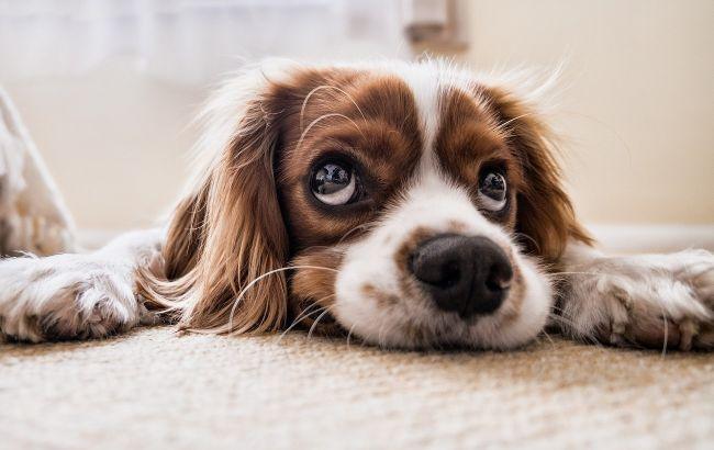 Ученые наконец-то выяснили, сколько лет собакам: не один год к семи человеческим