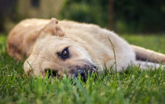 Фото: Собака (pixabay.com/Seaq68)