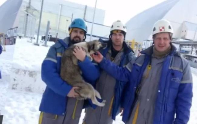 В Чернобыле спасли собаку, застрявшую на крыше саркофага ЧАЭС