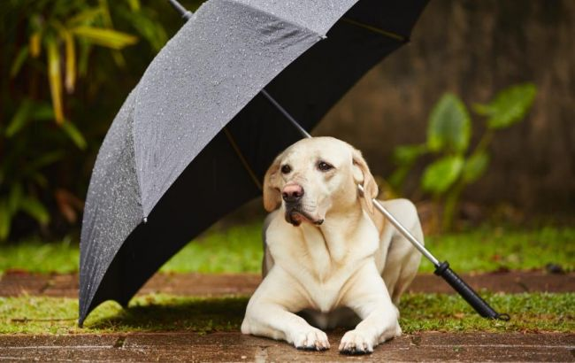 Фото: в Україні очікуються дощі