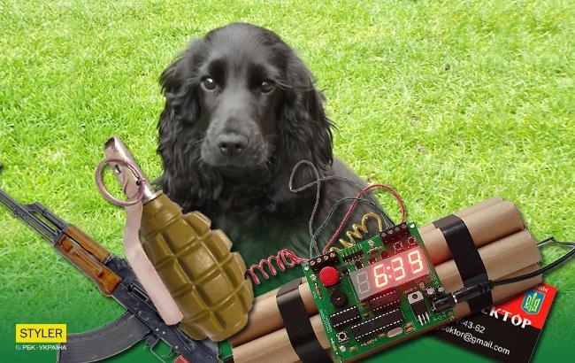Маразм крепчал: в Крыму собаку хотели обвинить в терроризме (видео)