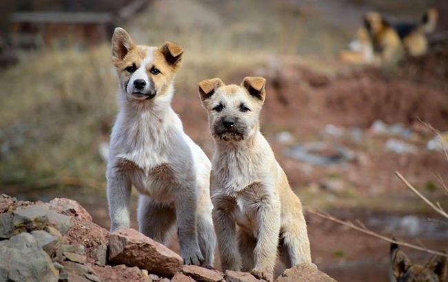 Фото: Собаки (facebook.com-kashtankashkola)