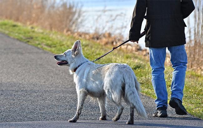 """""""Травма голови і живота"""": у Харкові жінку побили через зауваження про вигул собак"""
