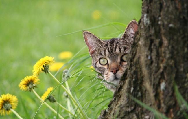 В Полтаве более 20 котов держали запертыми на протяжении 10 лет