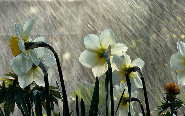 Фото: дощ