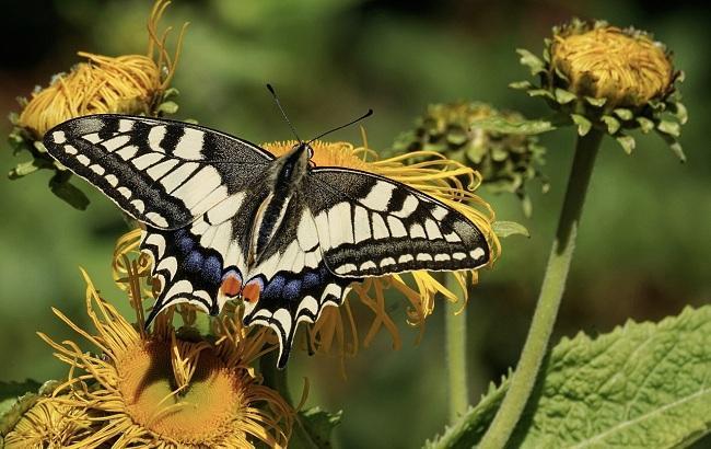 Иллюстративное фото (pixabay.com/suju)