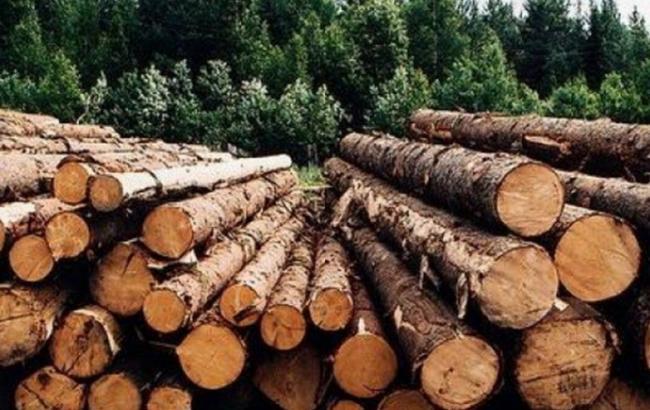 Украина намерена урегулировать вопрос экспорта древесины по нормам ВТО и ЕС