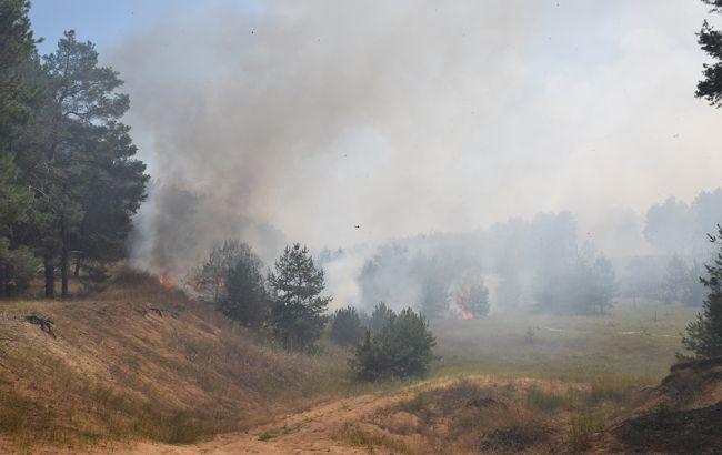 Фото: лесной пожар в Николаевской области (пресс-центр ГСЧС)