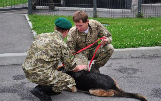 Фото: службовий собака прикордонників