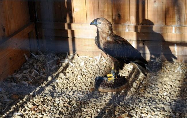 У Дніпрі відкрили перший притулок для покалічених птахів