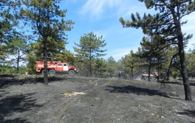 Фото: наслідки лісової пожежі під Херсоном (прес-центр ДСНС)