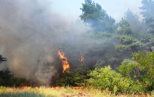 Мощный пожар наПолтавщине. пламенеют торфяники на70 га