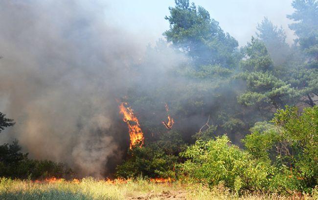 Влада Португалії витратить на допомогу постраждалим від пожеж більше 400 млн євро
