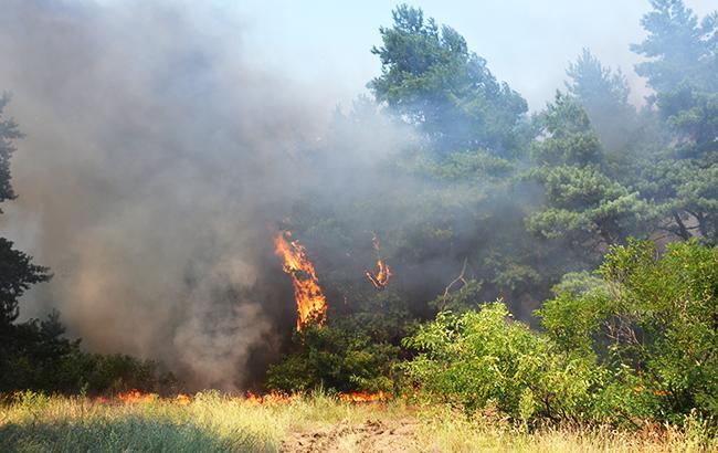 Ілюстративне фото: пожежа в лісі (dsns.gov.ua)