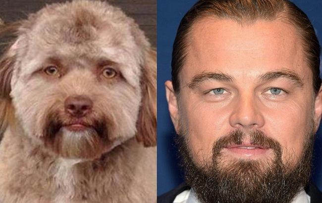 """Похож на голливудских звезд: пес с """"человеческим лицом"""" вызвал ажиотаж в сети (фото)"""