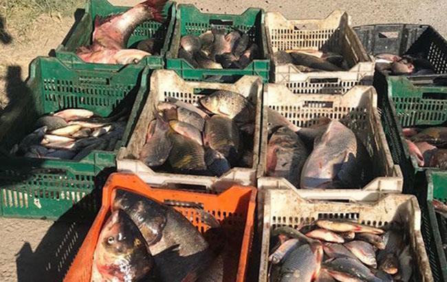 Фото: вилучена риба (npu.gov.ua)