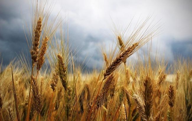 Почти тропики: Украину накроет грозовыми дождями