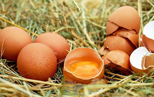 Фото: яйца (pixabay.com/Couleur)