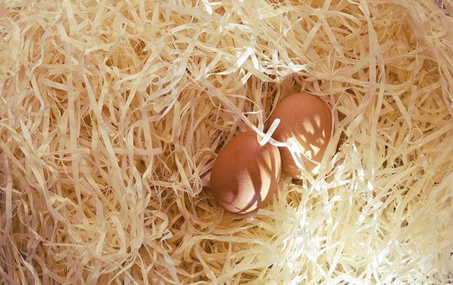 Фото: в Венгрии обнаружили яйца содержащие фипронил (pixabay.com)