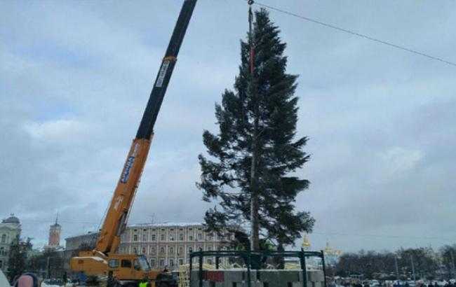 Стала відома доля головної новорічної ялинки країни після 16 січня