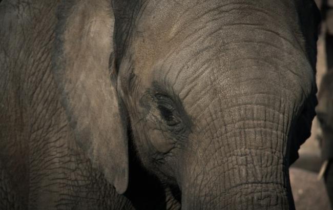 В Івано-Франківську вирішили помити на автомийці слона