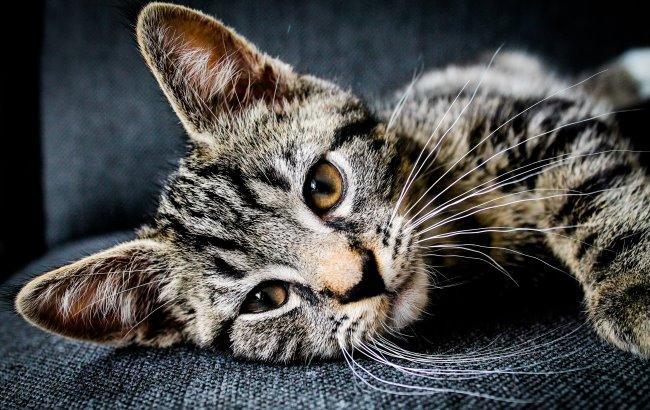 В одном из городов Франции отравили более 200 котов
