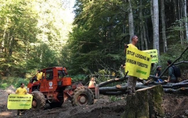 У Румунії лісоруби побили журналістів та еколога, які знімали фільм про вирубку лісу