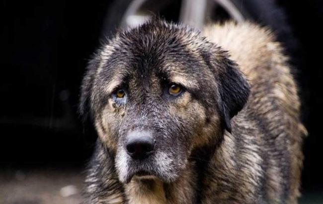 Фото: Догхантеры жестоко убили собак в Киеве (fitinterim.com)